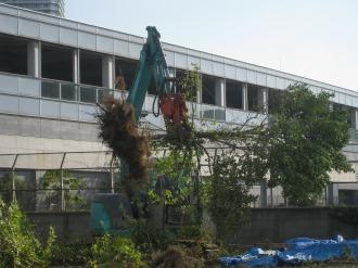 重機での既存樹木除去作業