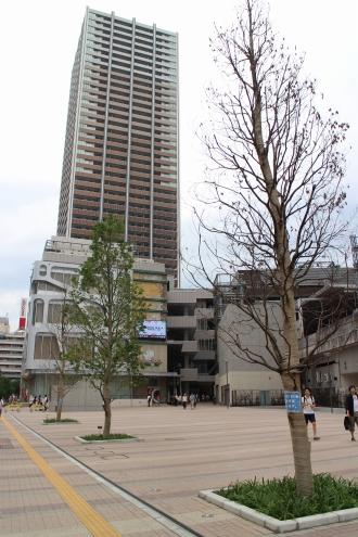 西街区「こすぎコアパーク」の街路樹