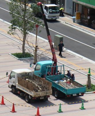枯れた街路樹の伐採