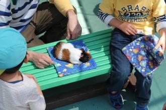 「ふれあい広場」での小動物とのふれあい