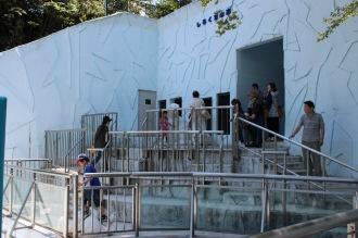 シロクマの展示スペースの見学