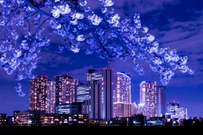 桜と武蔵小杉