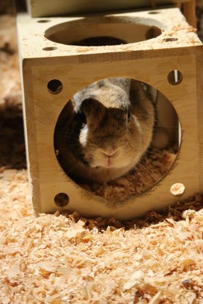 「アニマルスタジオ」のウサギ