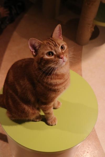 キャットパラダイスの猫