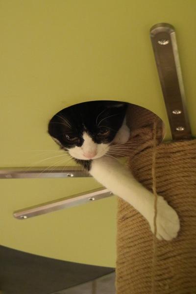 「キャットパラダイス」の猫