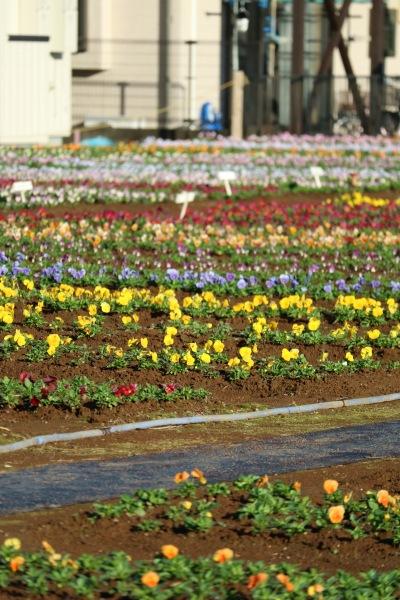 約40種を栽培