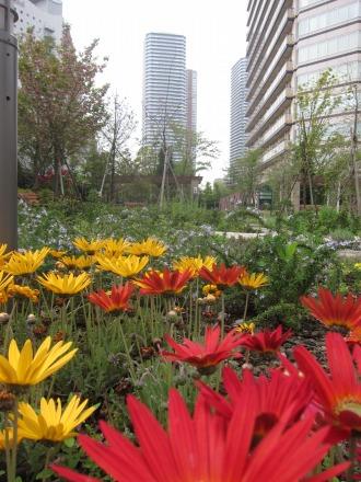 パークシティ公開空地の花々
