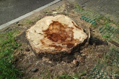 川崎市平和館前の街路樹伐採