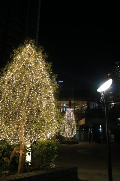 「パークシティ武蔵小杉 ザ ガーデン タワーズイースト」のイルミネーション