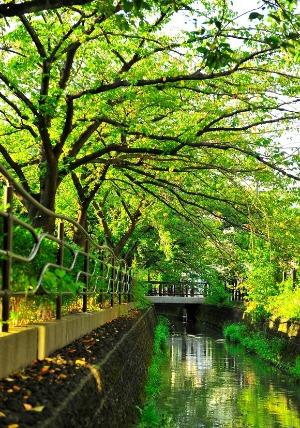 「緑河」 大舘 隆幸さん