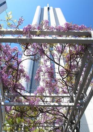 「摩天楼の春」 小山 文夫さん