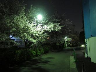 渋川沿い・サライ通り付近の夜桜