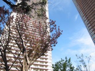 パークシティ武蔵小杉の八重桜