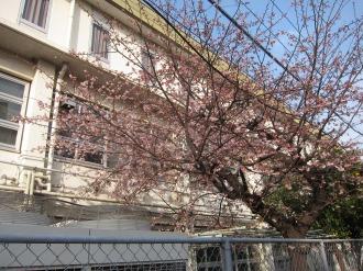 中原電車区の早咲きの桜