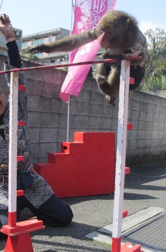 猿回しのお猿さん「アポロ」