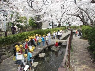 桜咲く渋川(サライ通り商店街付近)