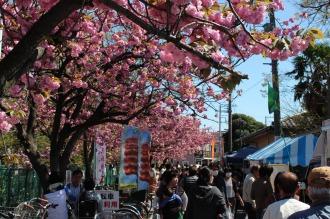 満開の八重桜と、出店