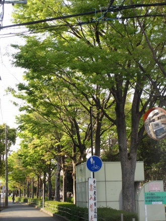 並木道の新緑