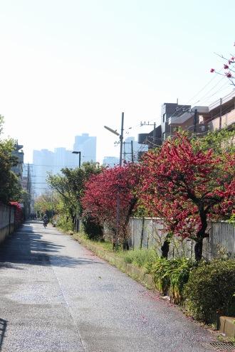 4月に開花していた宮内付近の桃