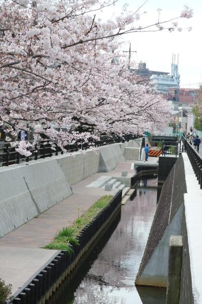 法政二中・高前に整備された遊歩道