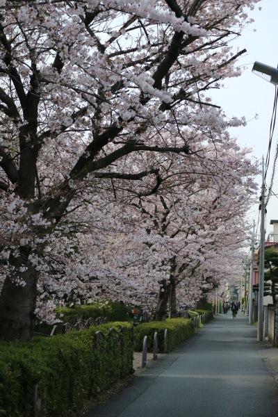 従来から遊歩道が整備されていたサライ通り商店街付近