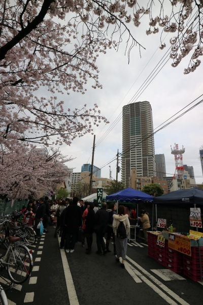 渋川沿いのソメイヨシノとプラウドタワー武蔵小杉