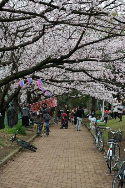 お花見シーズンの中原平和公園