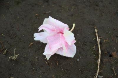 散った花弁