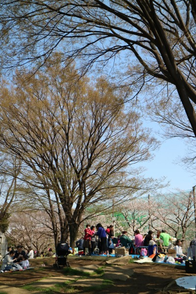 中原平和公園でのお花見