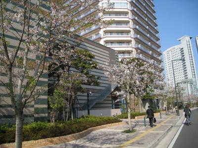2009年のミッドスカイタワーのソメイヨシノ