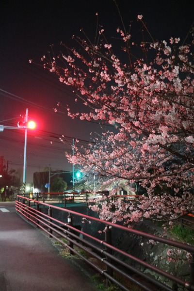 信号によるライトアップ