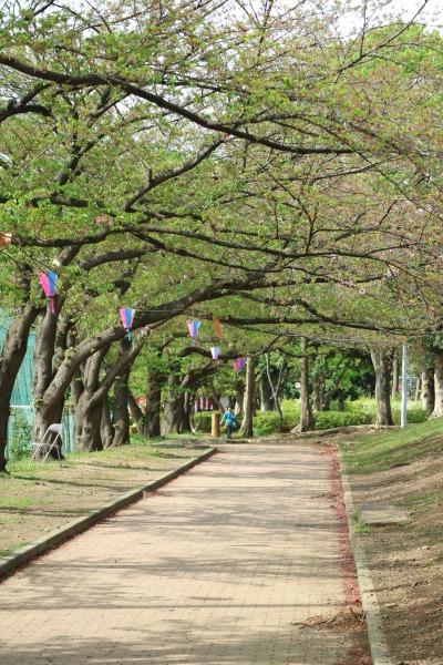 中原平和公園のソメイヨシノ
