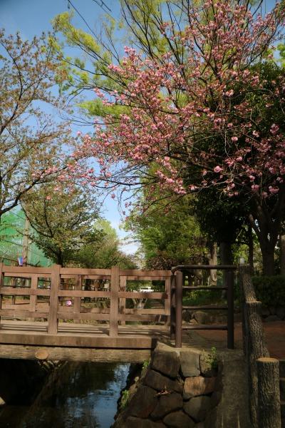 一部に八重桜も