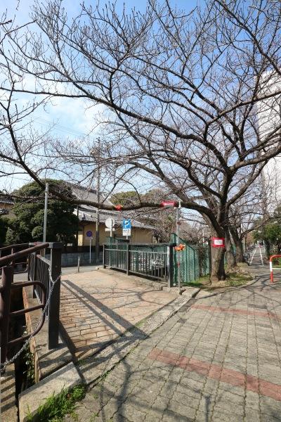 総合自治会館前のソメイヨシノ