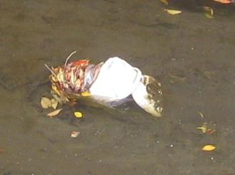 川底に投棄された炊飯器