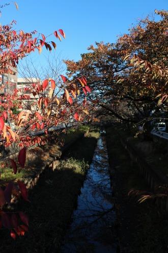 渋川の元住吉(西加瀬)付近