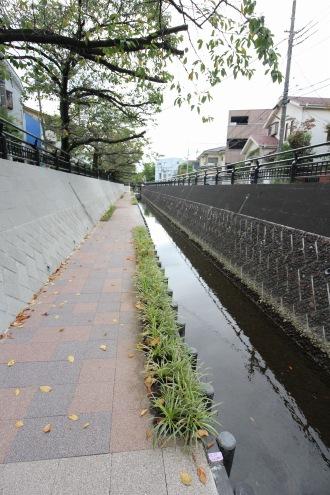 完成した親水遊歩道