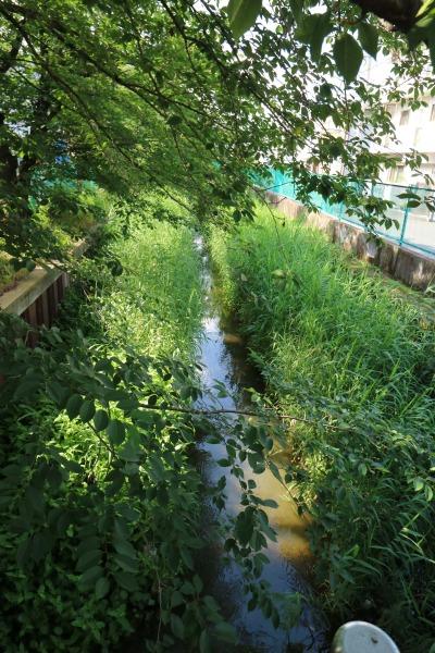 稲荷橋先の渋川
