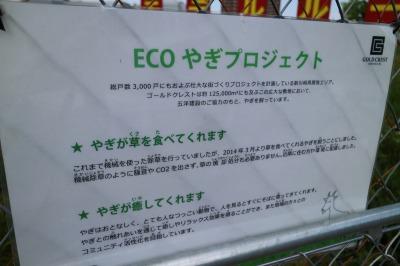 「ECOやぎプロジェクト」