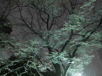 雪中の木々