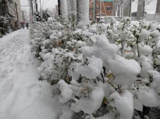 南武沿線道路の積雪