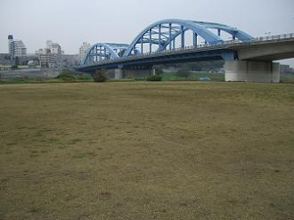 丸子橋第2広場の芝荒れ