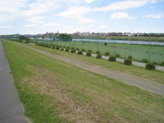 多摩川緑地(写真奥が丸子橋)