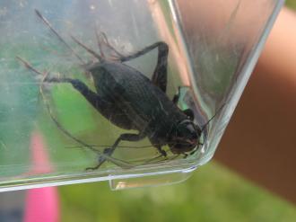 河川敷の昆虫たち