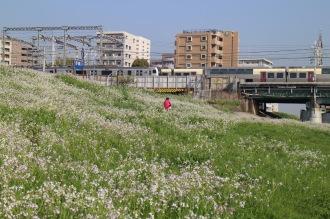 横須賀線とハマダイコン