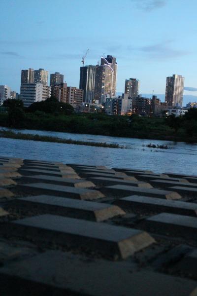 板チョコレートの護岸ブロックと、武蔵小杉の高層ビル群