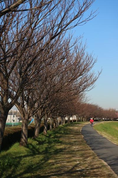 周辺の土手に並ぶ木々