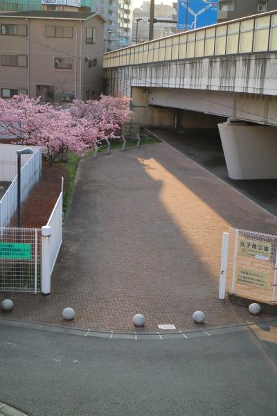 丸子橋そばの丸子橋公園