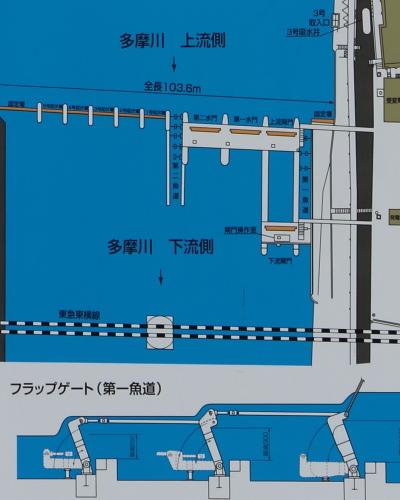 調布取水堰の平面図