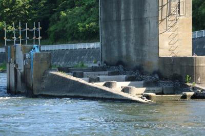 調布取水堰の魚道